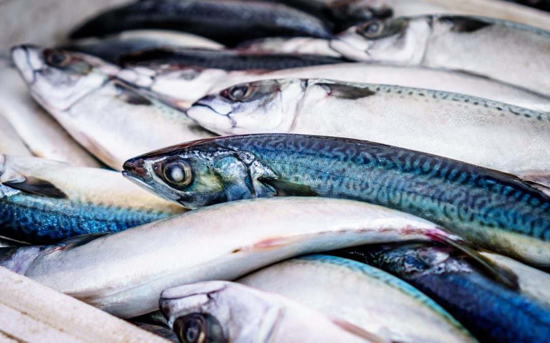 Something Fishy Going On – Farmed or Wild Caught? Can You Tell The Difference?
